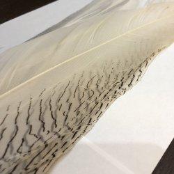 画像3: 【CANAL】 Silver Pheasant コンプリートテール No.2