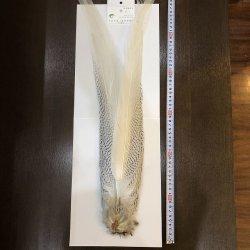 画像1: 【CANAL】 Silver Pheasant コンプリートテール No.2