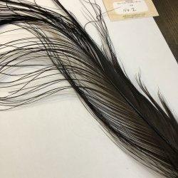 画像2: 【ANGLE】 BlueEared Pheasant tail Lサイズ No.2