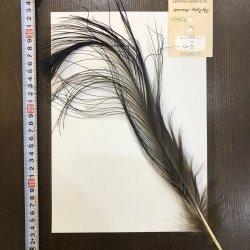 画像1: 【ANGLE】 BlueEared Pheasant tail Lサイズ No.2
