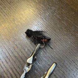 画像2: 【Rainy's】Dave's Black Cricket